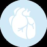 équilibre cardiovasculaire